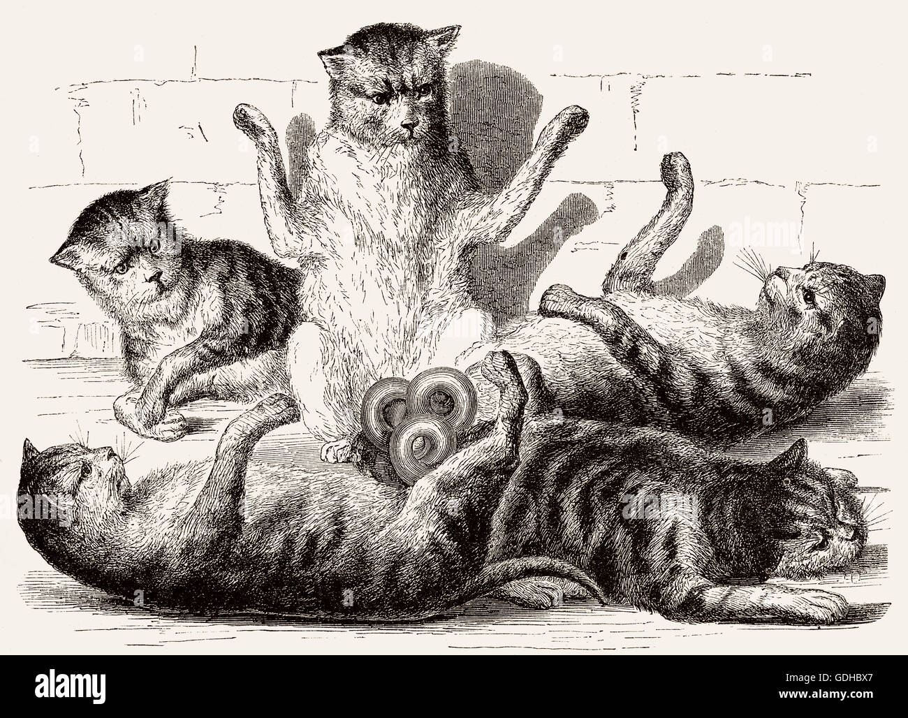 Five cats are joined at the tails, illustration, 19th century - Stock Image