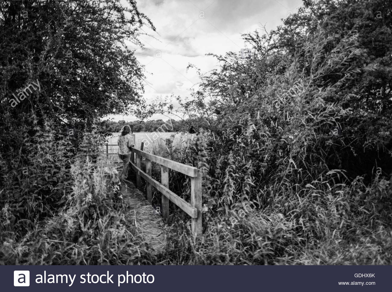 Woman seen crossing a wooden bridge by way of a field of corn. - Stock Image