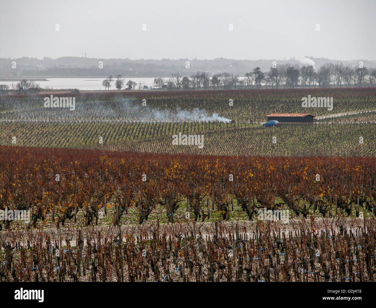 vineyards of Saint-Julien seen from Pauillac, Gironde, France Stock Photo