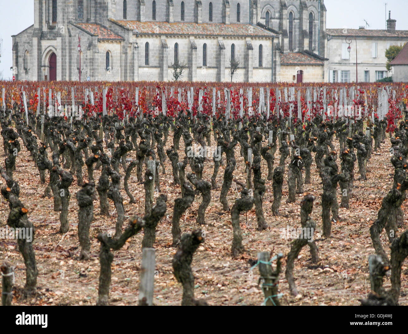 vineyard and church of Pomerol, Libourne Stock Photo