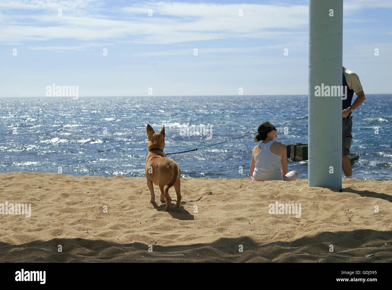 geography / travel, Israel, Naharija, beach, beach goer with dog, - Stock Image