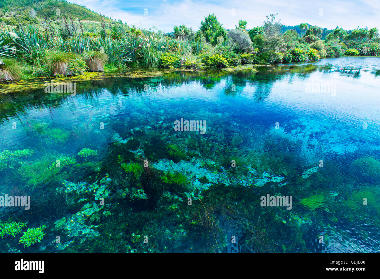 Te Waikoropupu Springs, Pupu Springs in the Golden Bay region on the South Island  in New Zealand - Stock Image