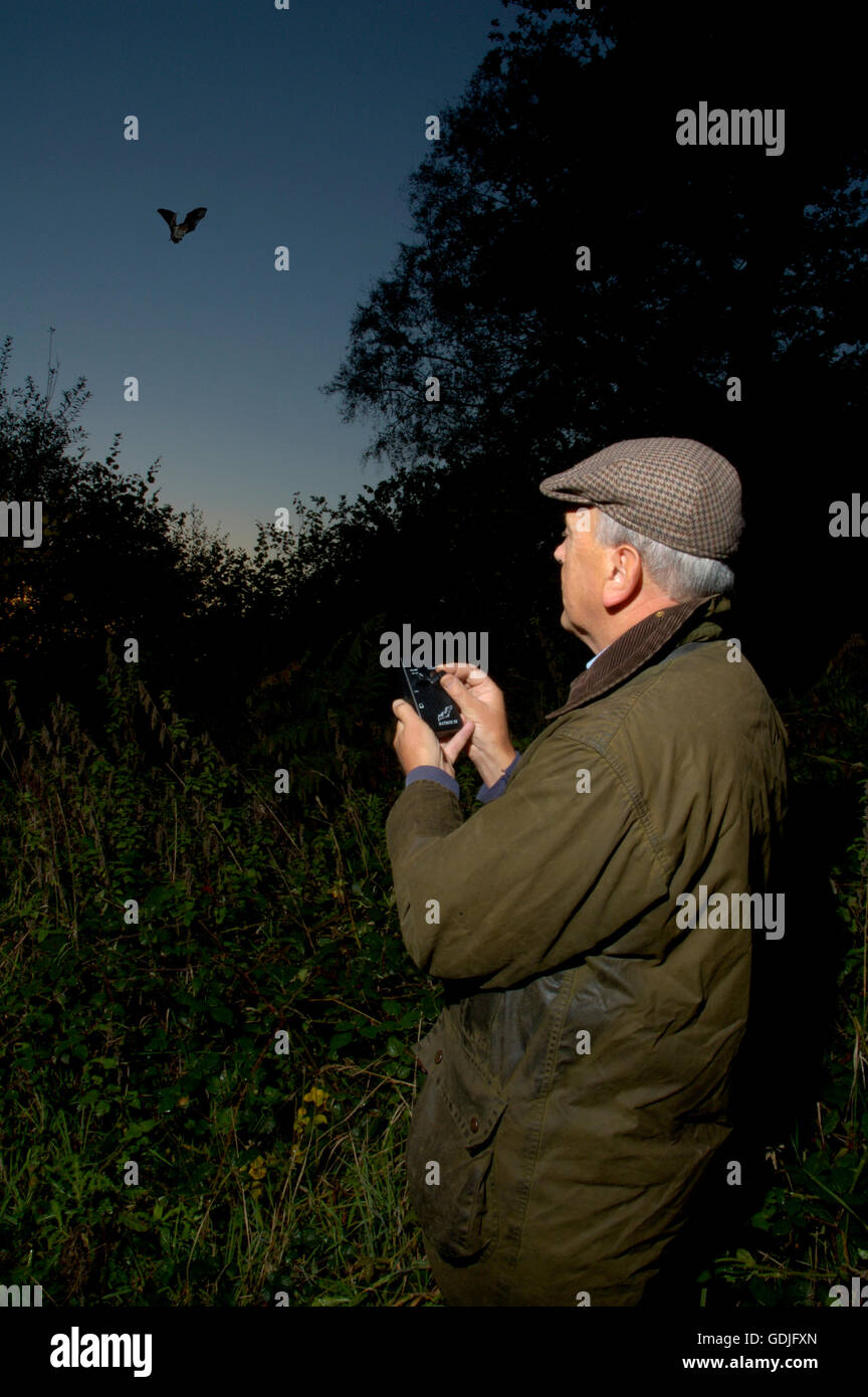 Professional ecologist using bat detector to survey bat numbers and species - Stock Image
