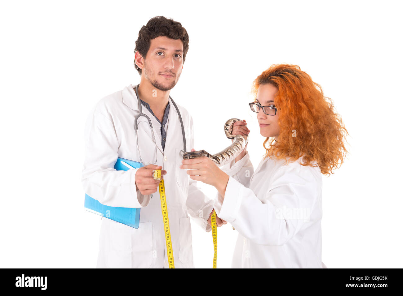 Veterinarian team measuring a snake isolated in white - Stock Image