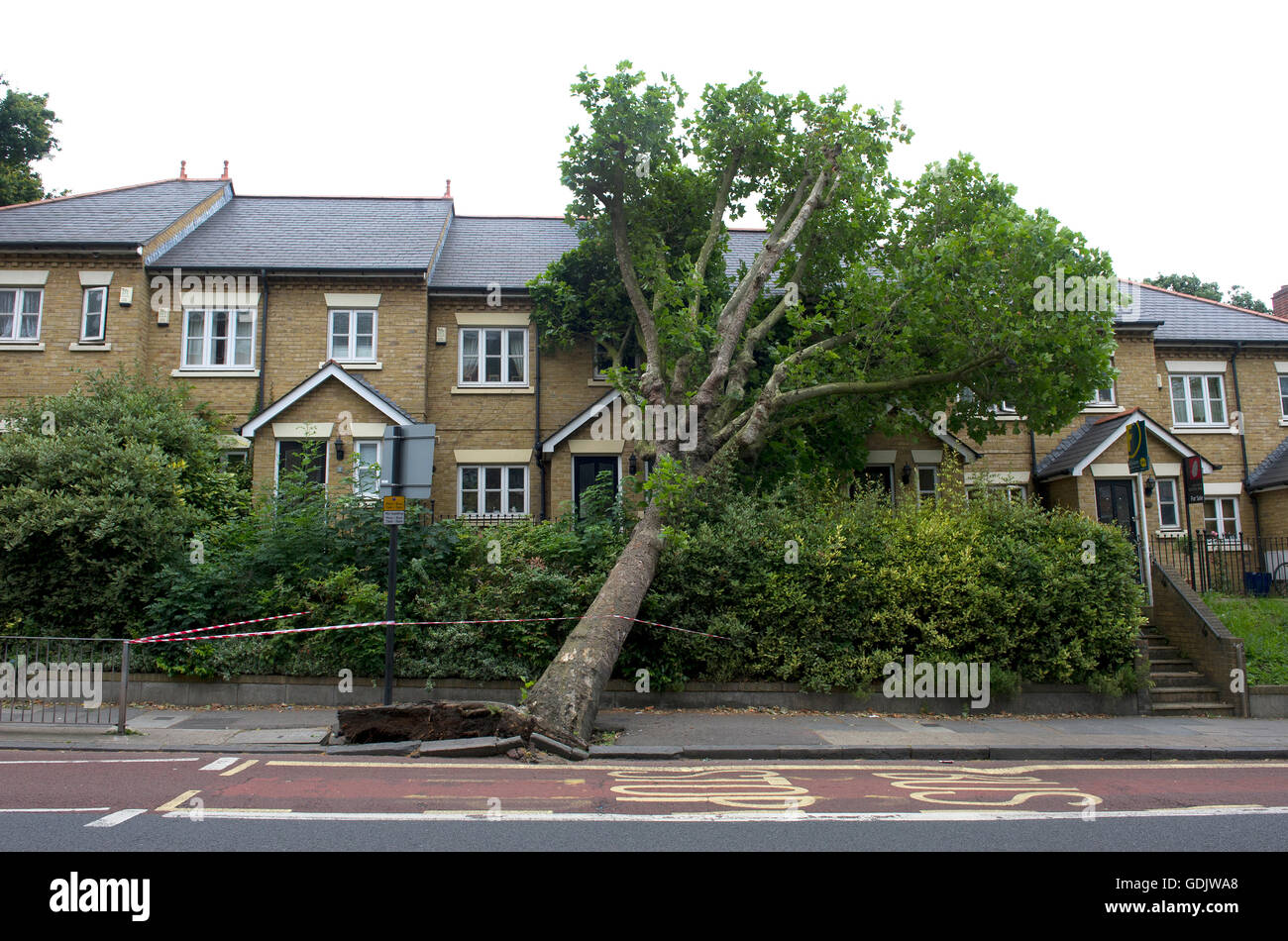 An uprooted tree leans against a house in East Dulwich London - Stock Image