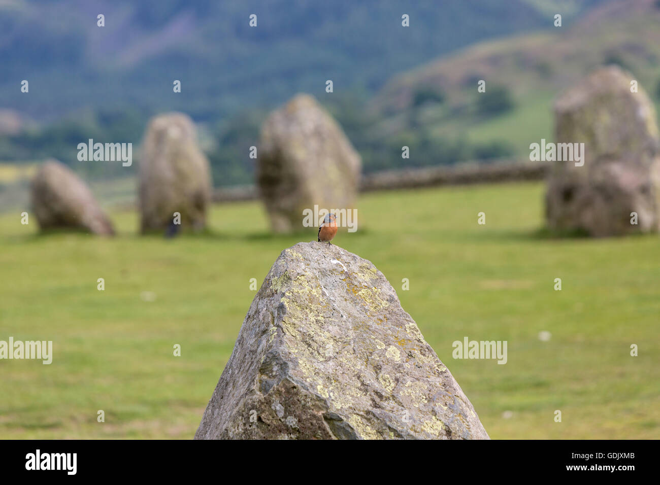 Common chaffinch, Fringilla coelebs, on top on one stone in Castlerigg stone circle, Keswick, Cumbria, North West - Stock Image