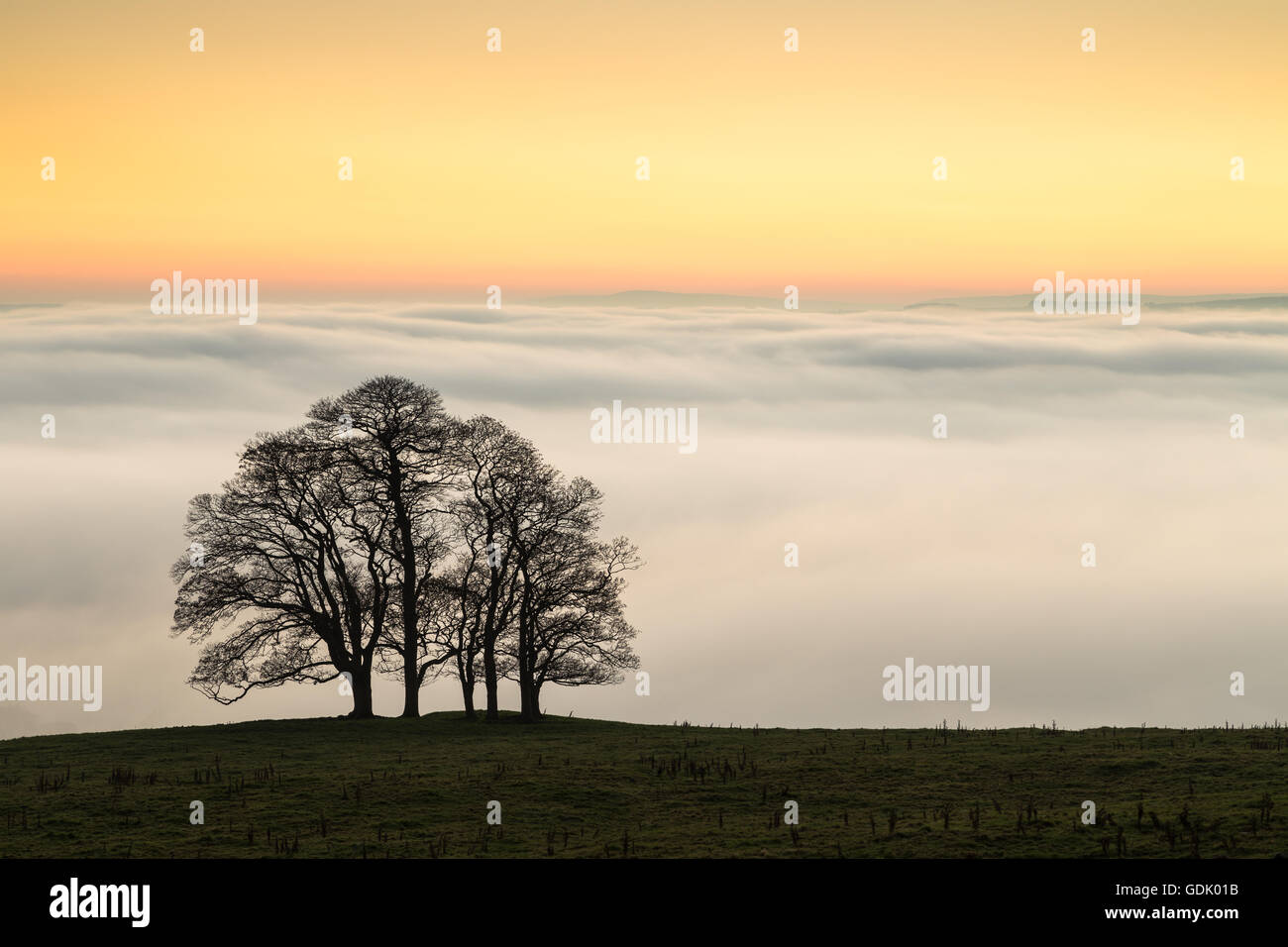 A group of trees are silhouetted against the setting sun and a cloud inversion over the Ribble Valley, North Yorkshire - Stock Image