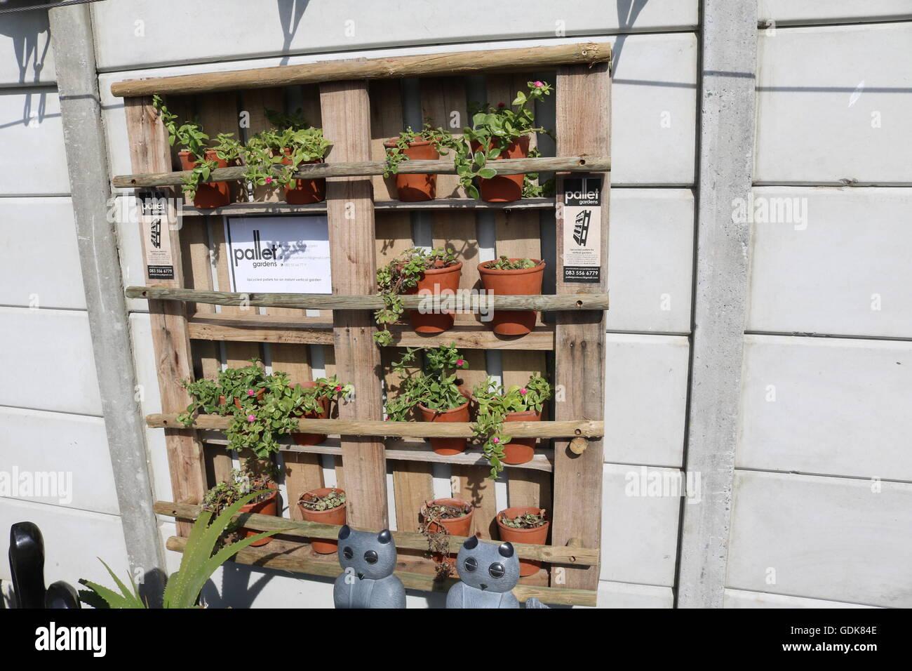 wooden pallet reused as pot plant holder - Stock Image