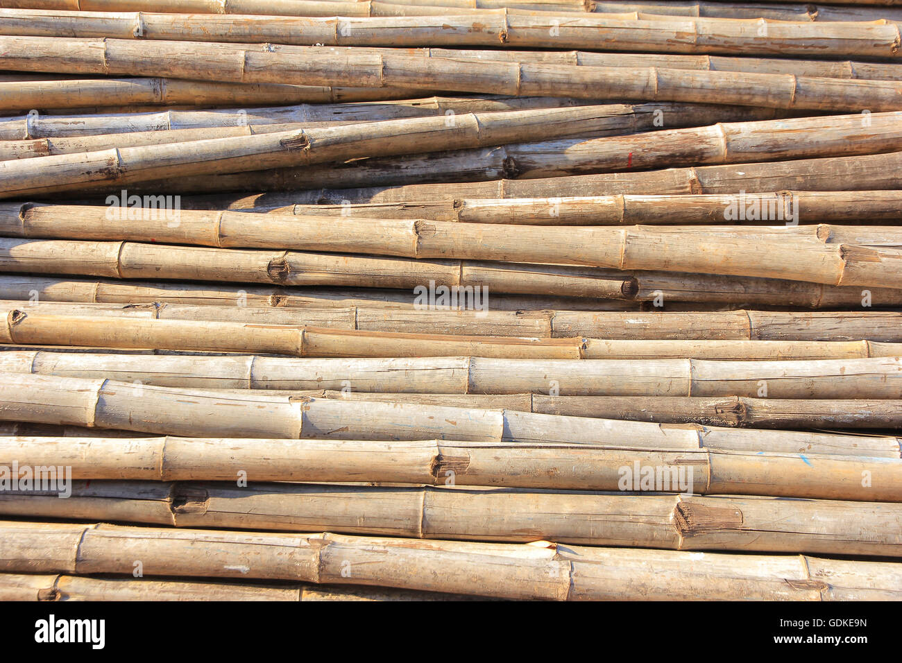 The bamboo used in construction and practical. - Stock Image