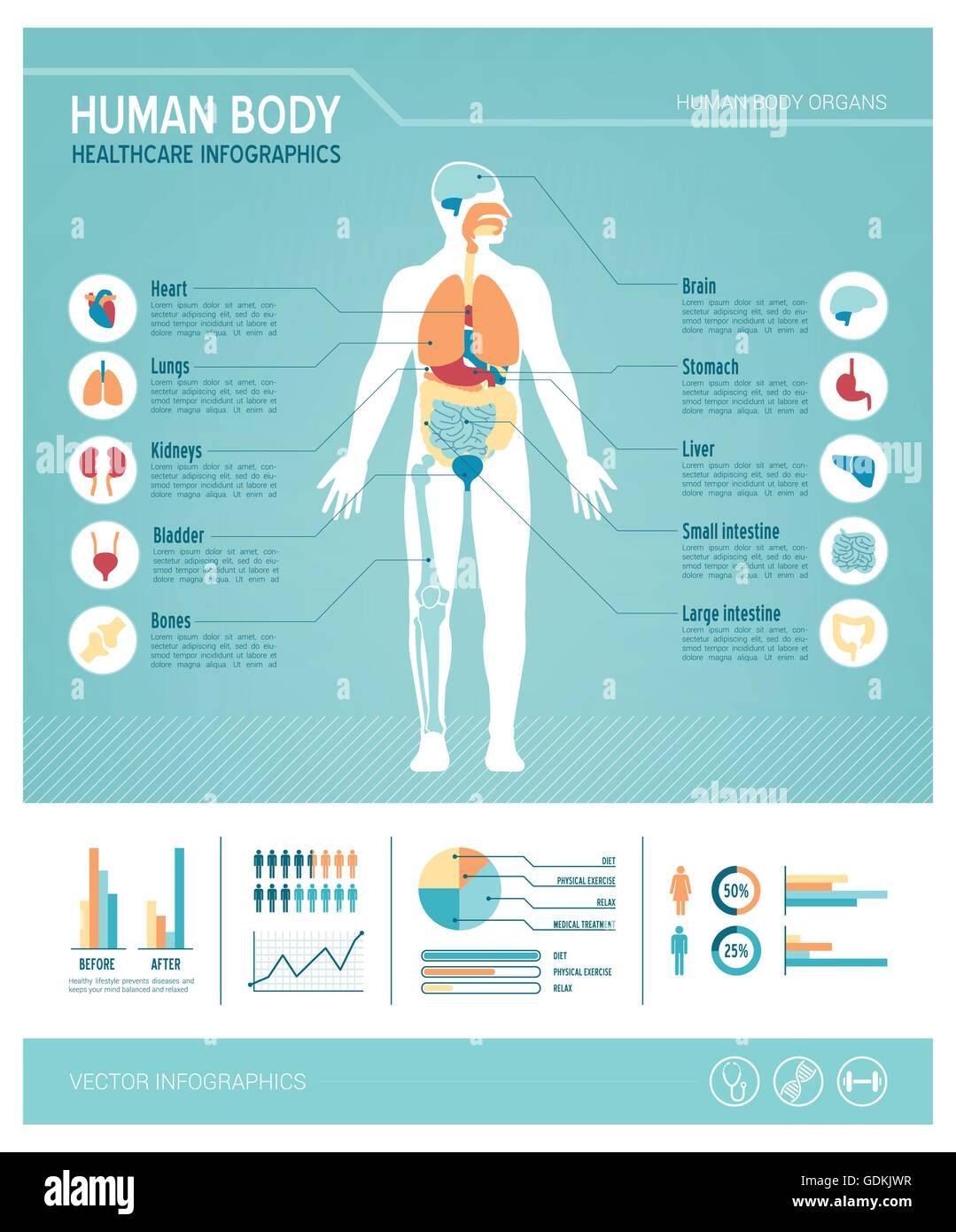 Human body health care infographics, with medical icons, organs, charts, diagarms and copy space Stock Vector