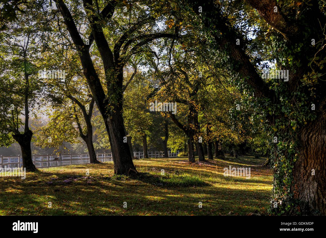 Parks of Château de Rouillac, Pessac-Léognan - Stock Image
