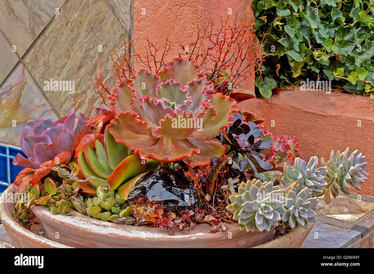 Saucer planted with succulents:  Echeveria, Aeonium, Kalanchoe, - Stock Image