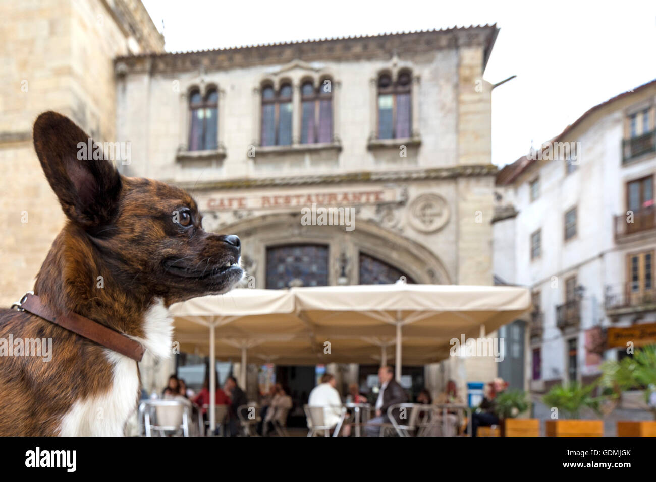 Dog in front of a sidewalk cafe, Coimbra, Coimbra District, Portugal, Europe, Travel, Travel Photography - Stock Image