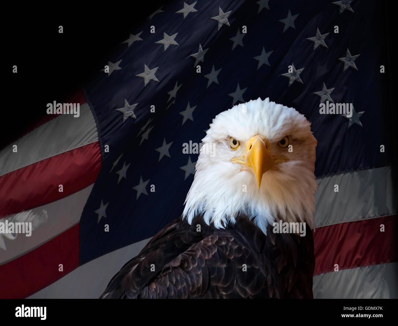 the bald eagle as the us national symbol of freedom Why is the bald eagle a us symbol  because it stands as a symbol of power and freedom,  is the bald eagle a national symbol of the us.