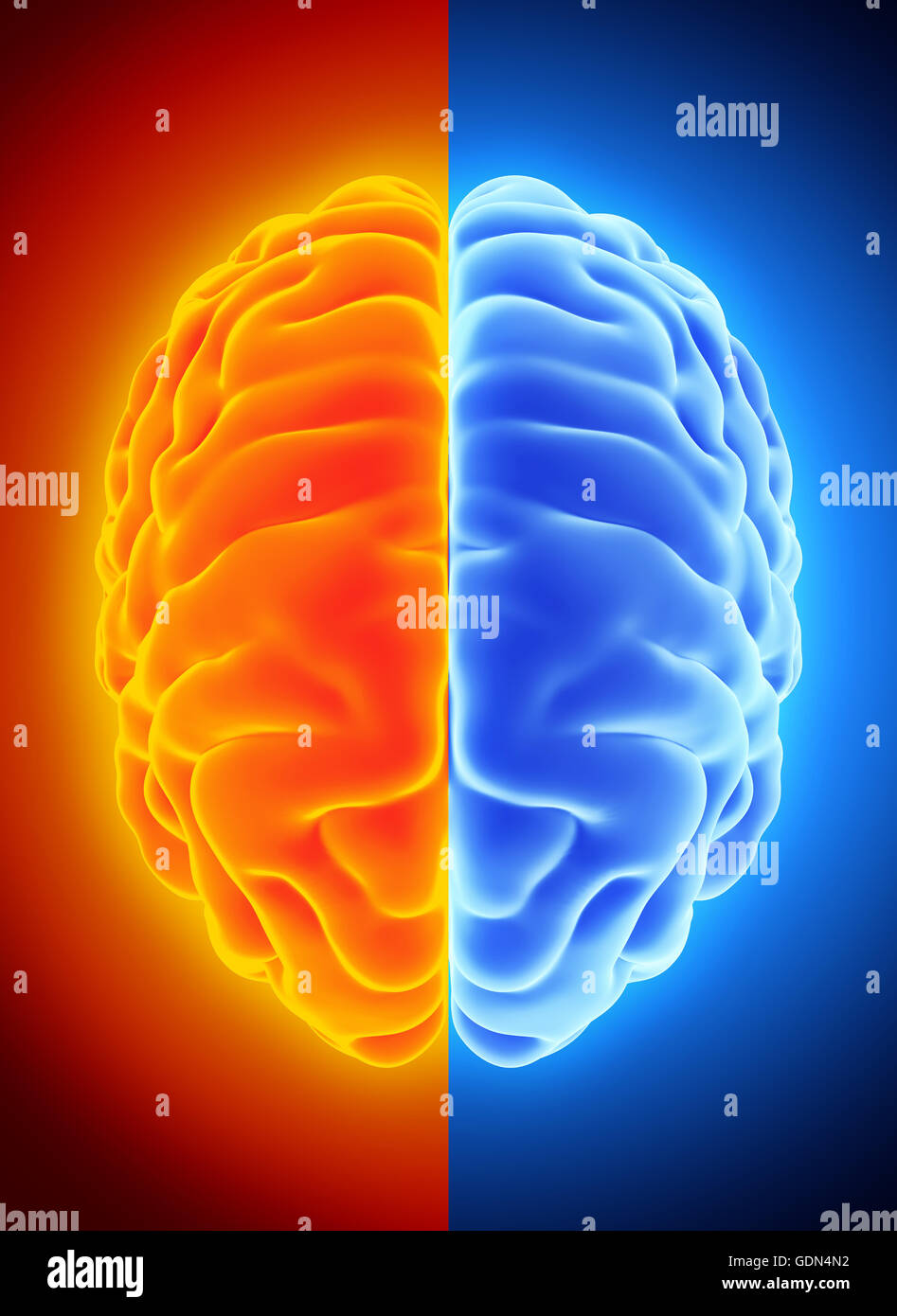 3d Illustration Of Bright Half Blue And Orange Brain Anatomy And