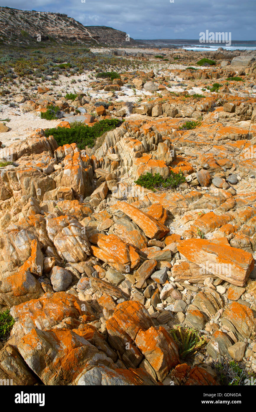 Lichen-covered rocks at Corny Point on the Yorke Peninsula - Stock Image