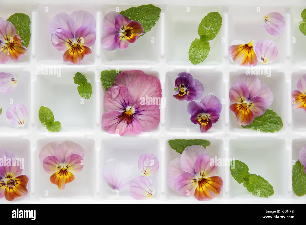 Closeup edible flowers and mint in ice cubes tray on white vintage closeup edible flowers and mint in ice cubes tray on white vintage linen background mightylinksfo