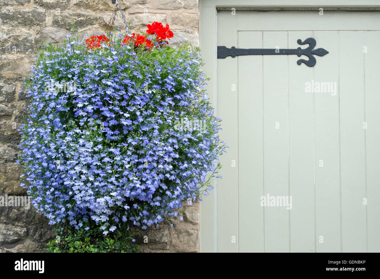 Lobelia Techno Blue Hanging Baskets Outside A Cottage In Stow On