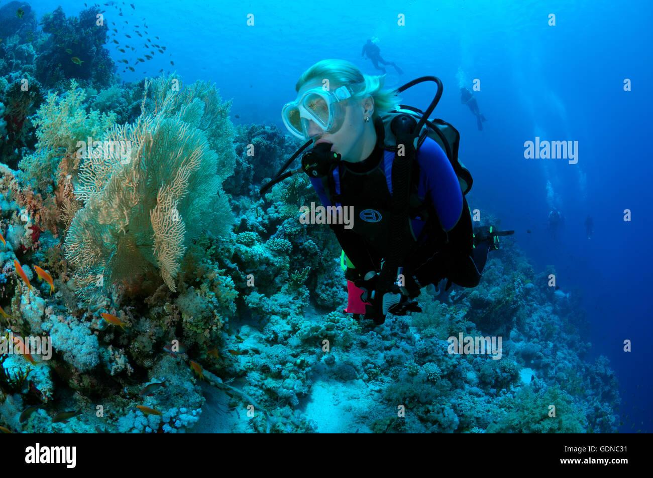 Female Scuba diver looking at the plumbings on the Shark Yolanda reef, Ras Mohammed national park, Sinai - Stock Image