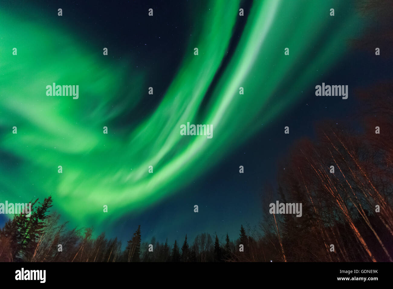 Aurora Borealis, Northern Lights Near Chena Resort, Near Fairbanks, Alaska