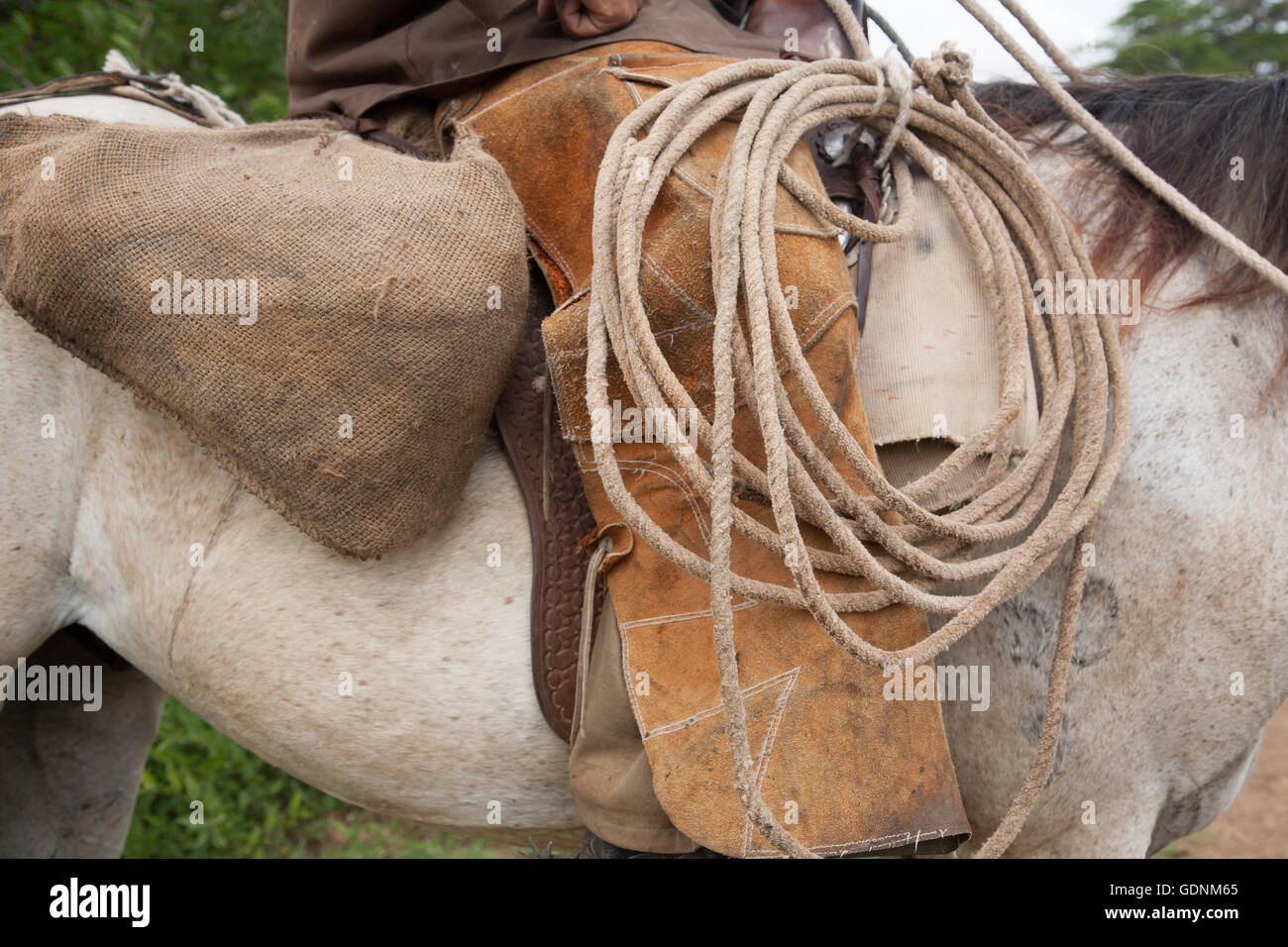 Cowboy with lasso rope on a horse in Cuba - Stock Image