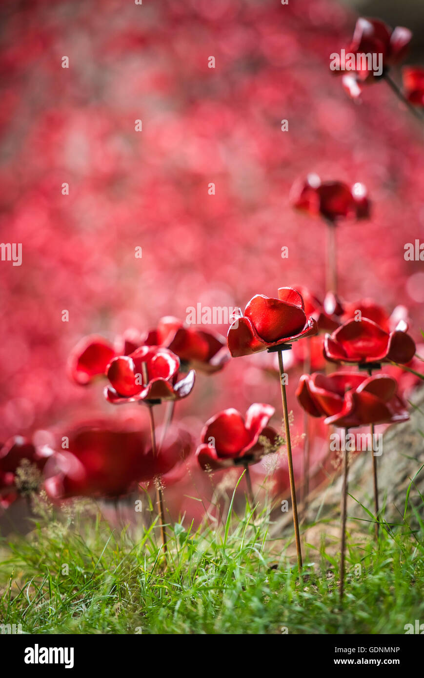 A sea of poppies at the Weeping Window display at the Black Watch Museum in Perth Scotland - Stock Image