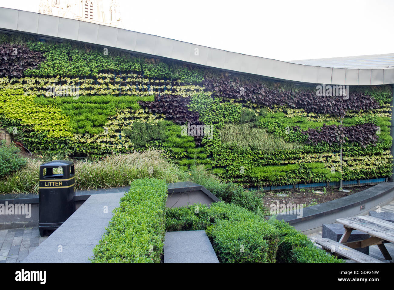 Attractive A Vertical Garden Of Vines And Hedges.   Stock Image