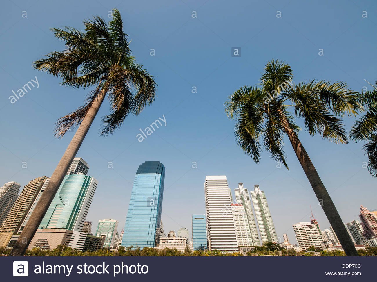 Low angle view of palm trees and sky scrapers, Benjakiti Park, Bangkok, Thailand - Stock Image