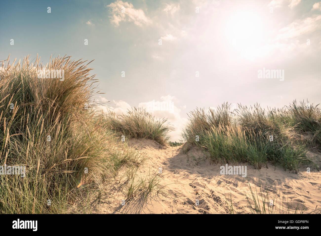 Dunes and marram grasses on Norfolk coast, UK - Stock Image