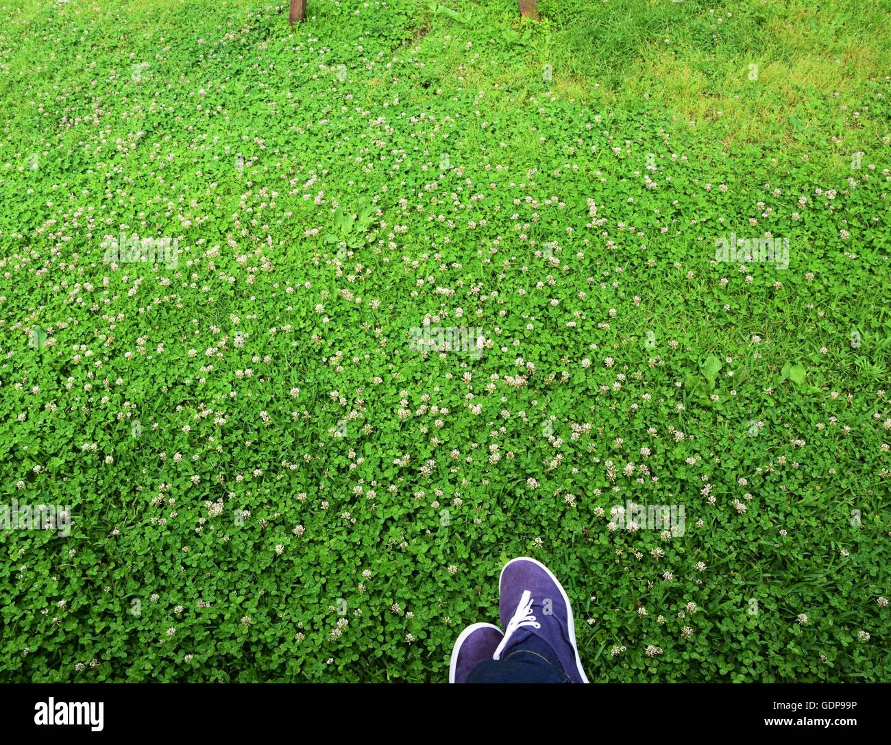 Top view of human feet on fresh green grass, relaxing moments in the nature, space for text - Stock Image