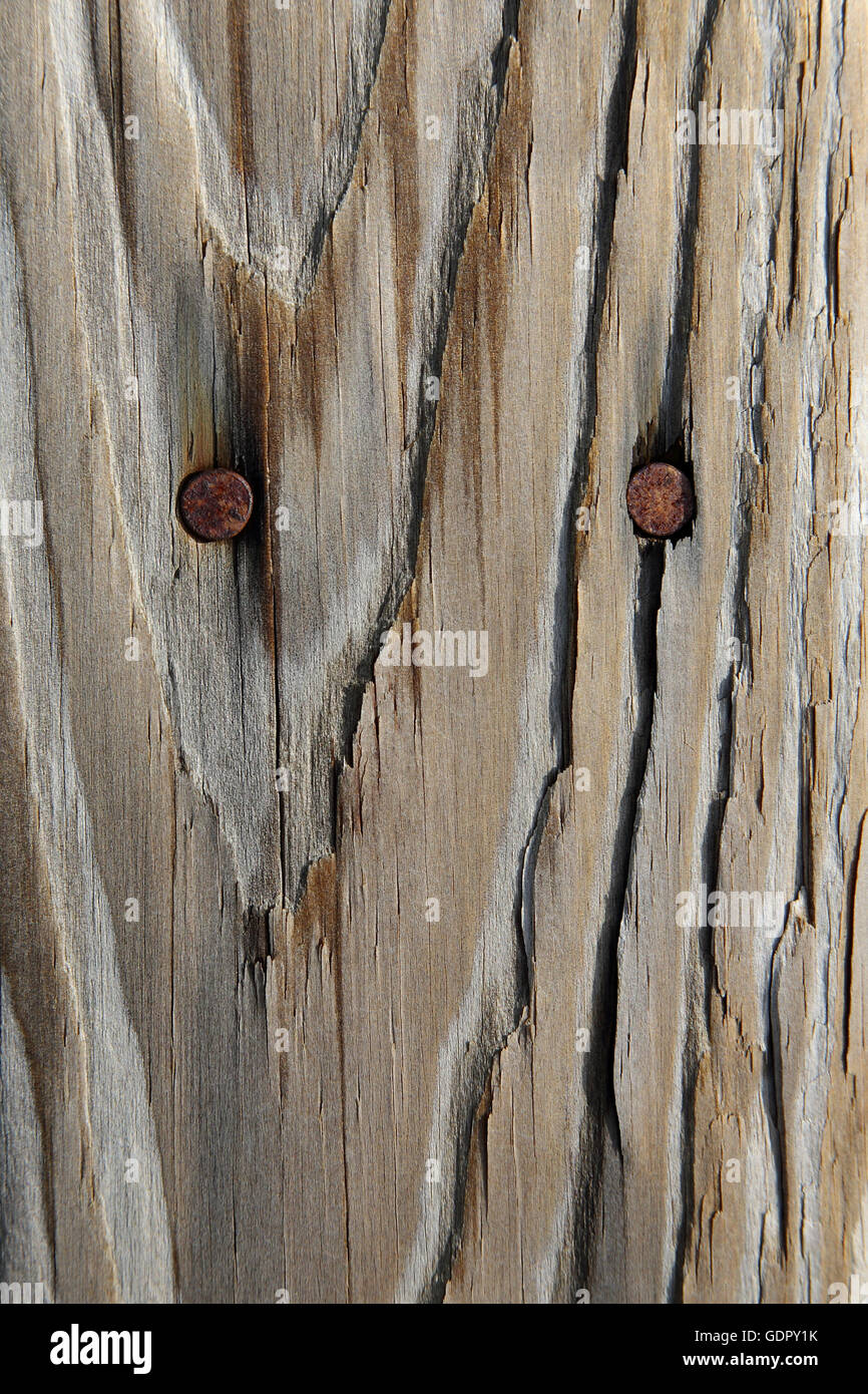 Closeup of weathered wood with rusty nails - Stock Image
