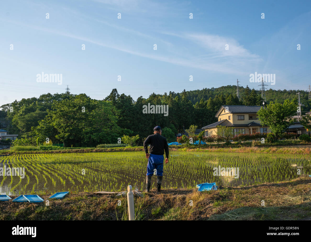 Man in front of his terraced rice field in an area that was affected by the 2011 nuclear disaster, Fukushima prefecture, - Stock Image