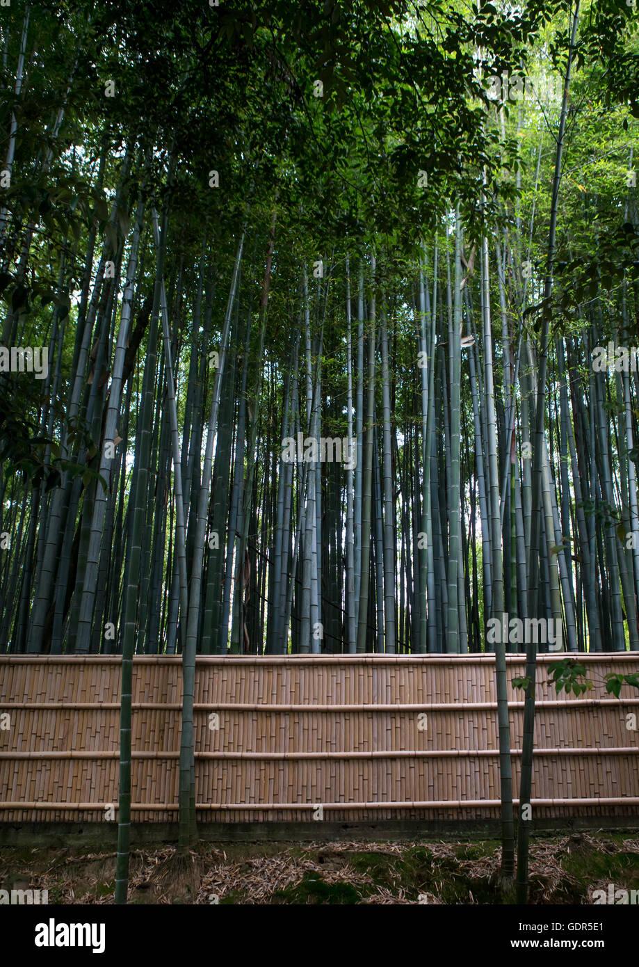 Bamboos in in koto-in zen buddhist temple in daitoku-ji, Kansai region, Kyoto, Japan - Stock Image