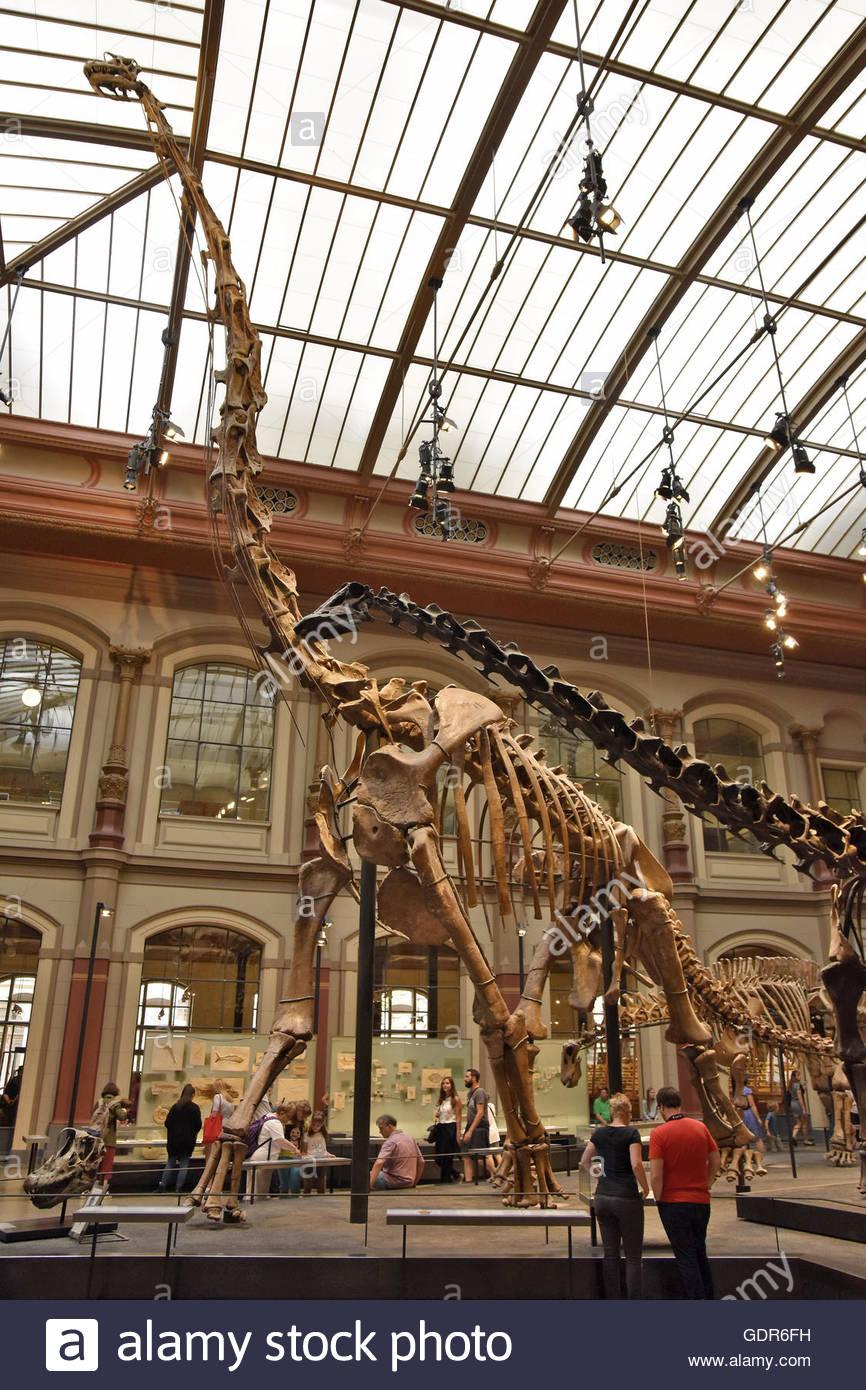 Dinosaurs skeletons in Museum of Natural History (Museum für Naturkunde) Berlin Germany Europe - Stock Image