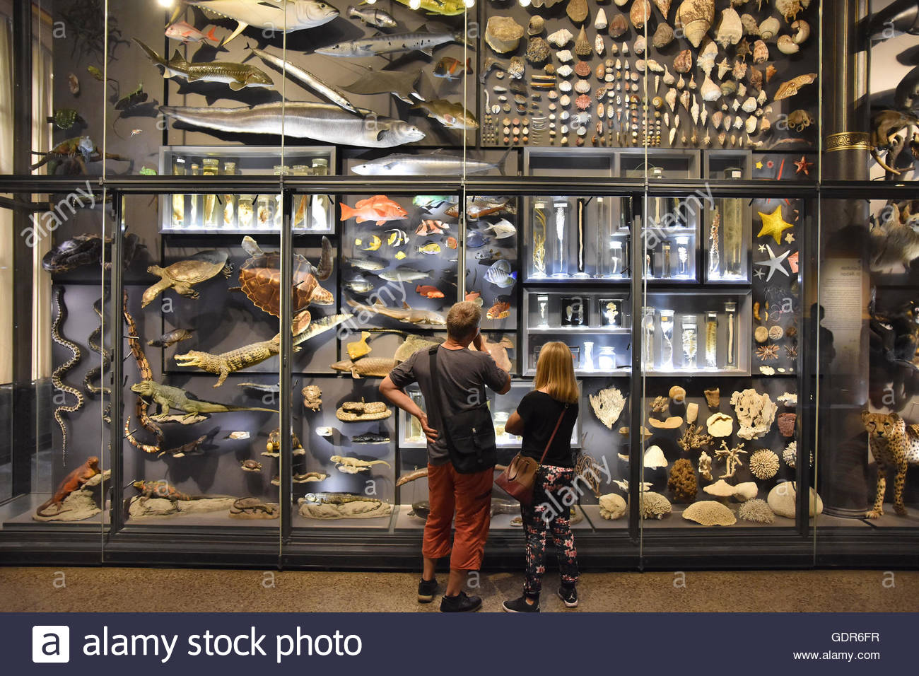 Visitors standing by large glass cabinets with various animals exhibits, Museum of Natural History Berlin Germany - Stock Image