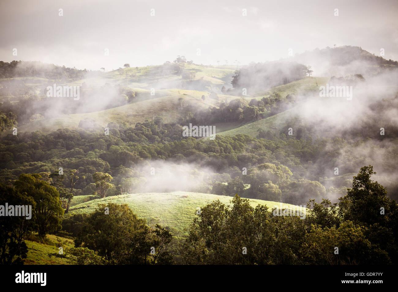 Atherton Tablelands on a Misty Morning - Stock Image
