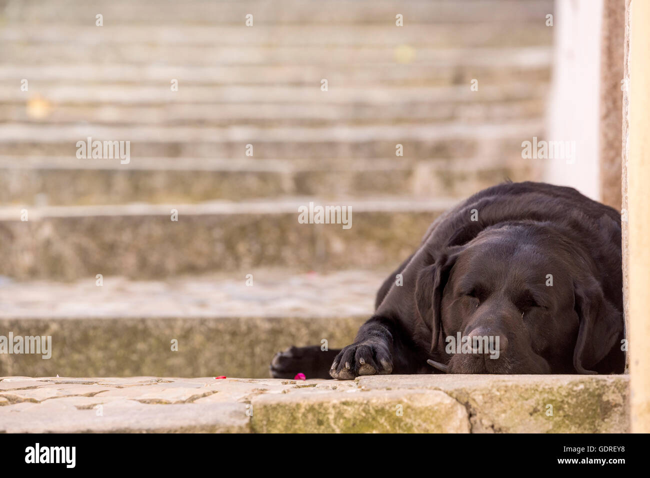sleeping dog in the streets of Sintra, on the steps of the streets, Lisbon, Lisbon, Portugal, Europe, Travel, Travel - Stock Image
