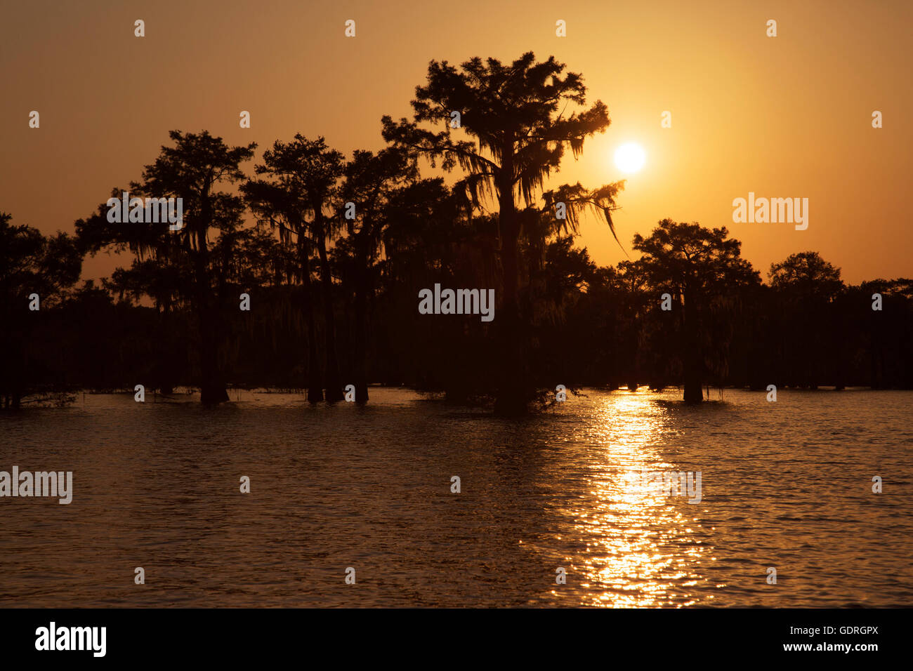 Bald cypress (Taxodium distichum) trees at sunset in Atchafalaya Swamp, the largest wetland in the United States - Stock Image