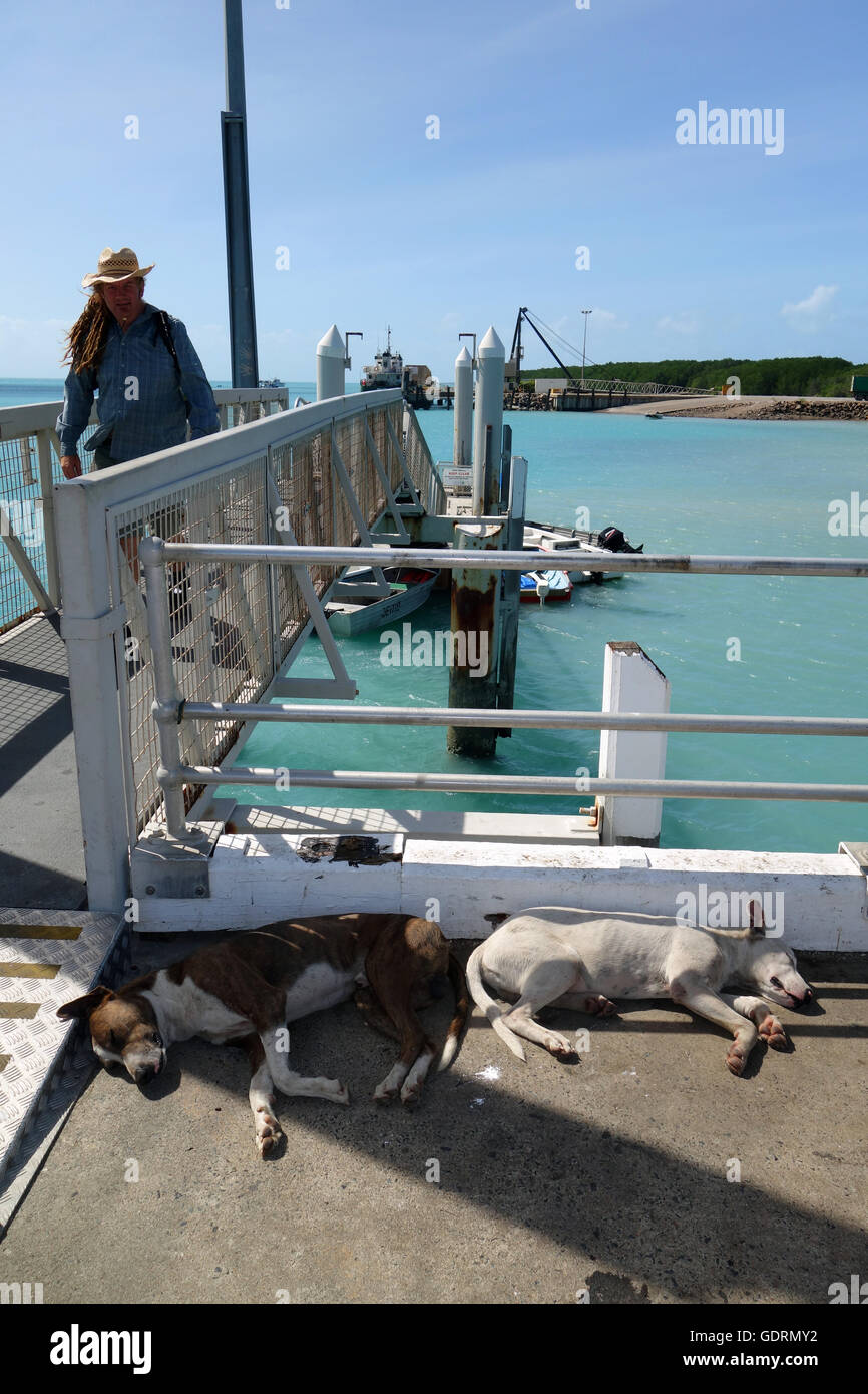 Dogs sleeping in shade on jetty, Horn Island, Torres Strait, Queensland, Australia. No MR or PR - Stock Image