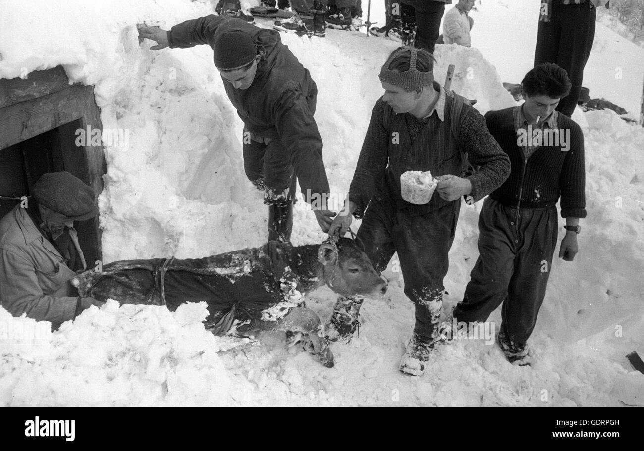 After an avalanche rescuers dig their way through the snow to a building, 1959 - Stock Image