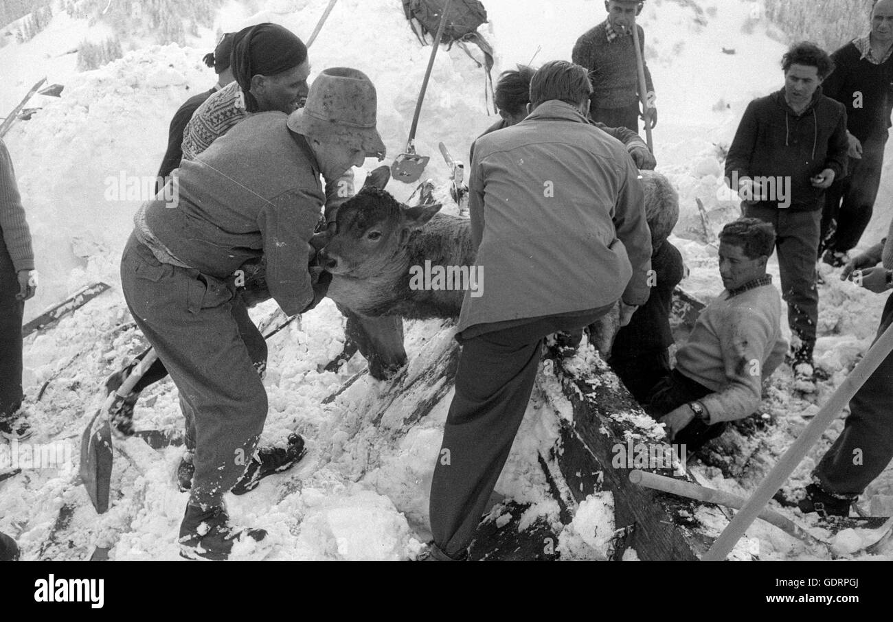 After an avalanche rescuers dig their way through the snow to a building, 1958 - Stock Image