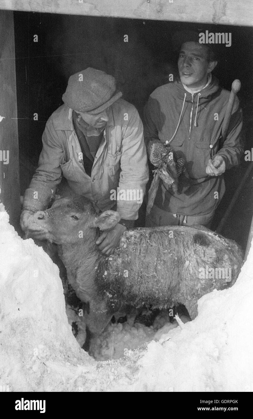 After an avalanche rescuers dig their way through the snow to a building, 1957 - Stock Image