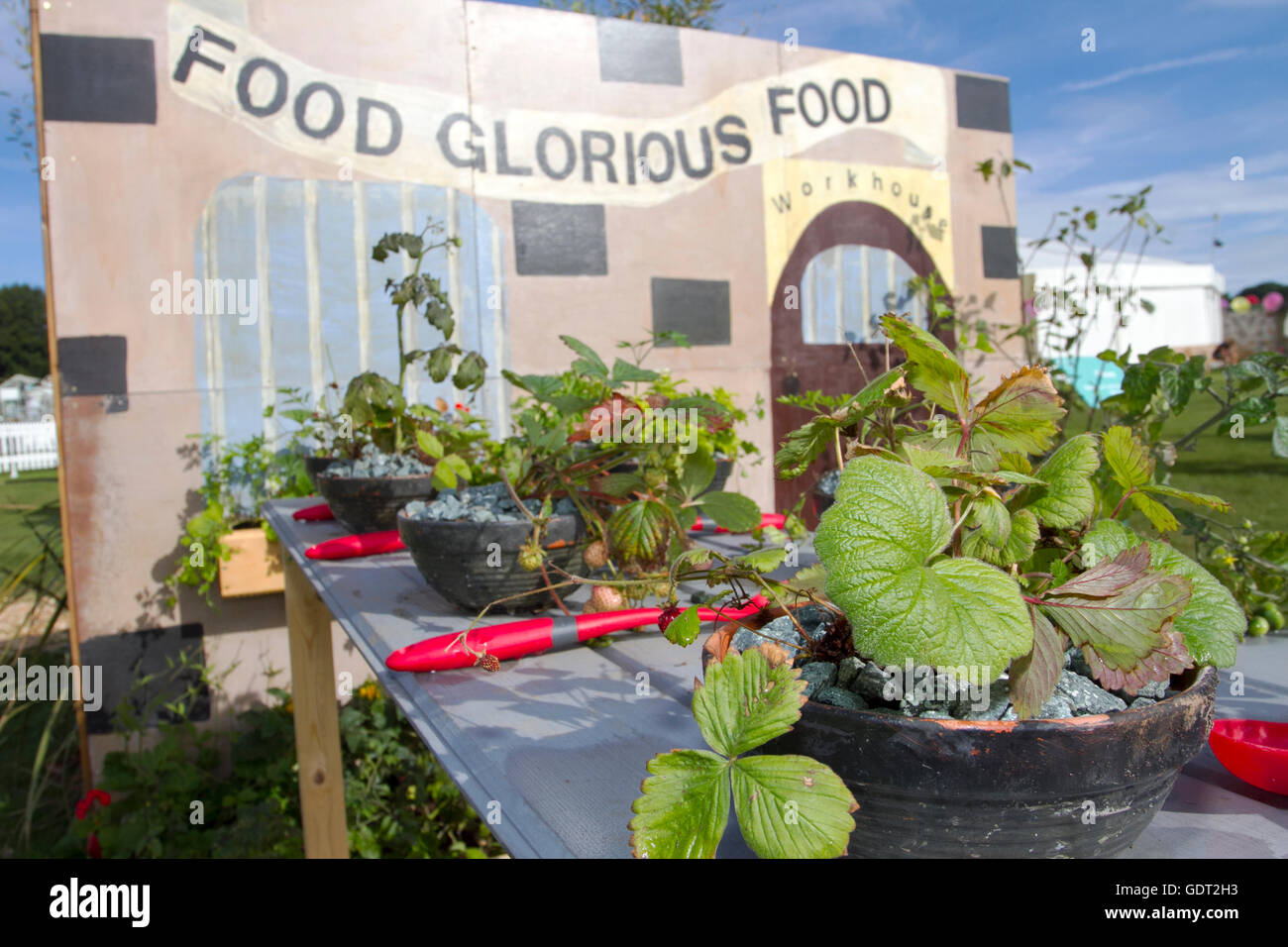 Tatton Park, Knutsford, UK. 21st July, 2016. The RHS Tatton Park Flower Show, the north's greatest garden event - Stock Image