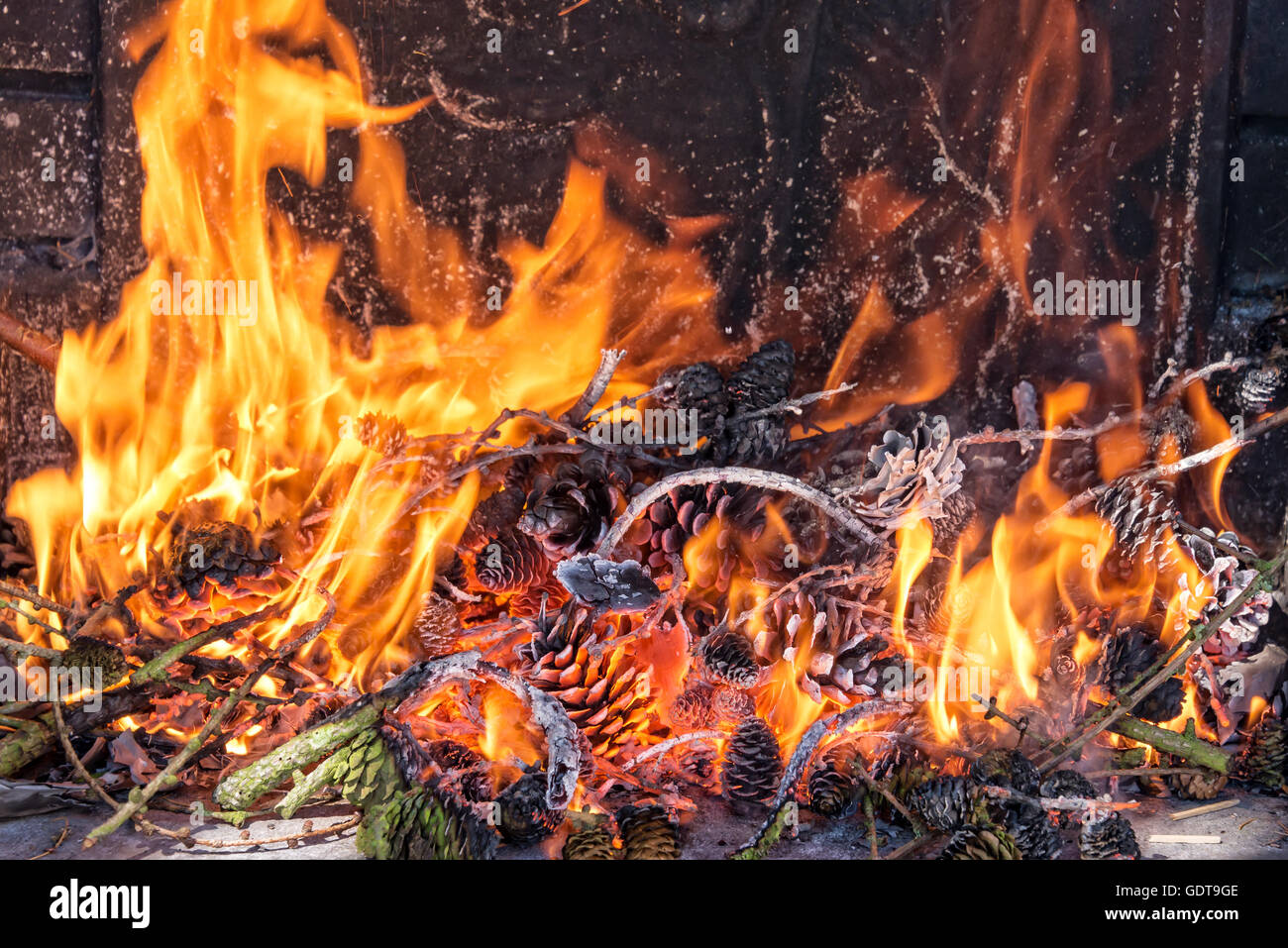 Close up on a fire with pine cones - Stock Image