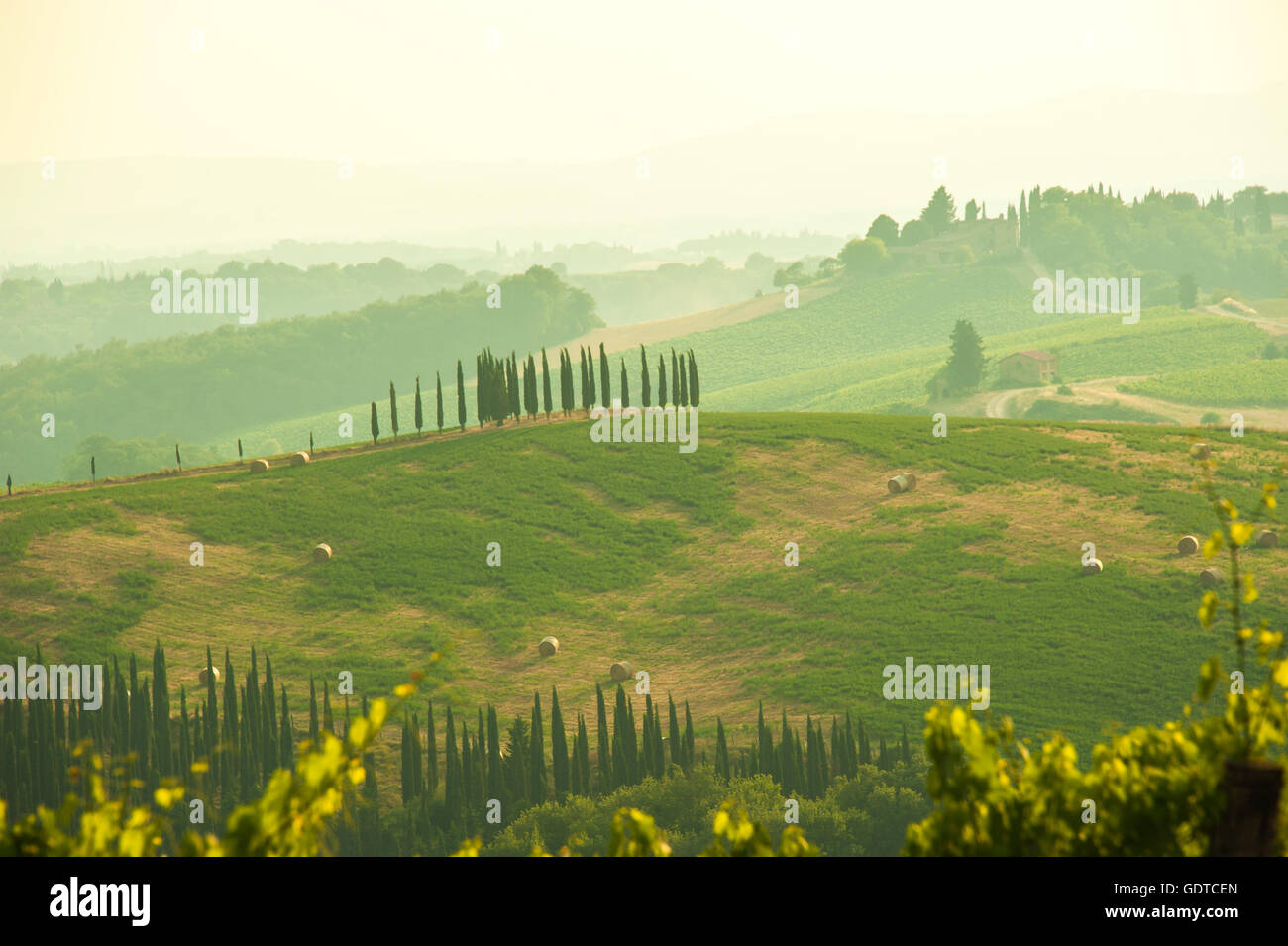 cypresses on hills light of the Crete Senesi, in the evening light near Pienza, Tuscany, Italy - Stock Image