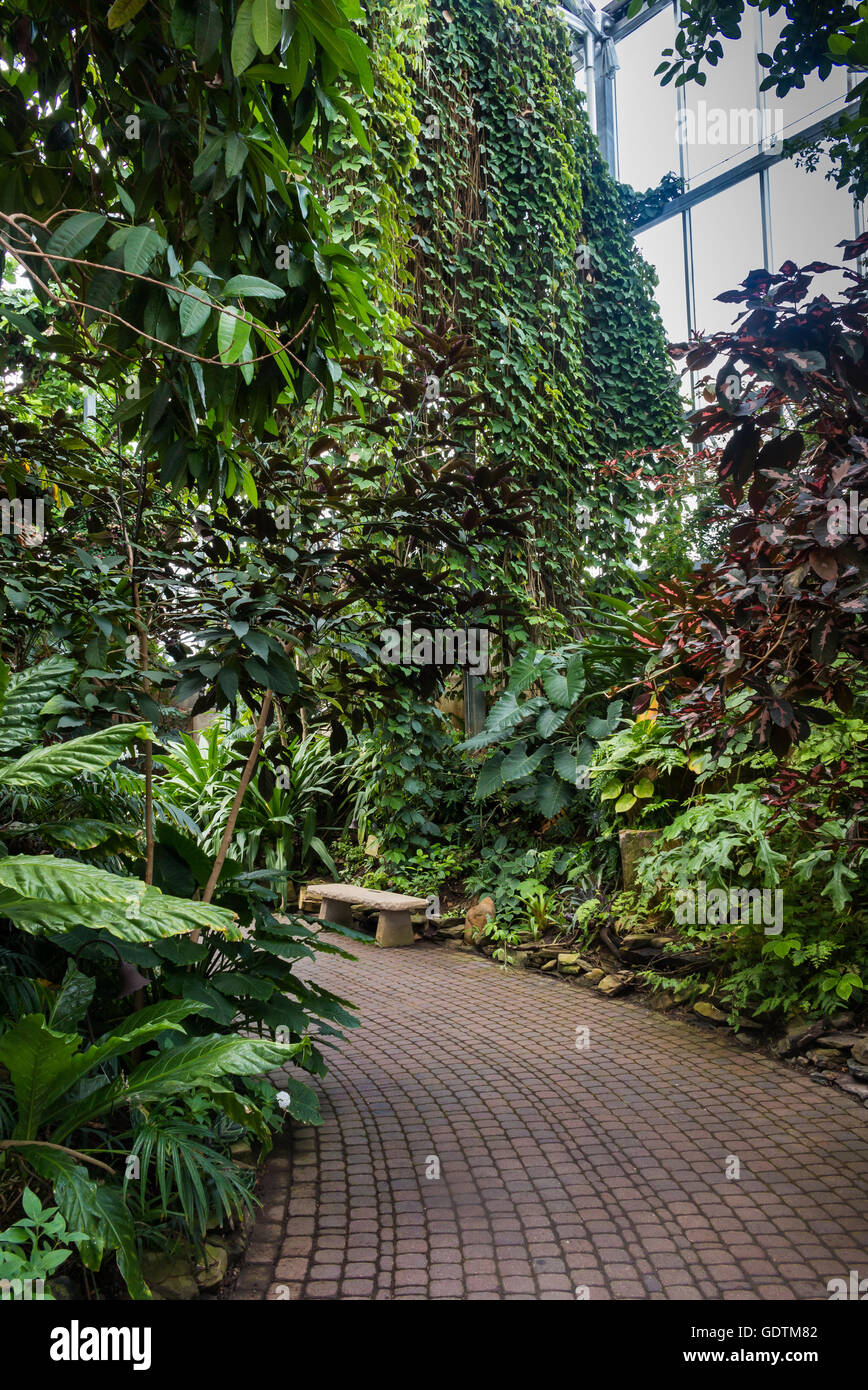 Glasshouse with tropical vegetation. Various trees, palms, plants. Meijer Gardens, Grand Rapids, Michigan, United - Stock Image