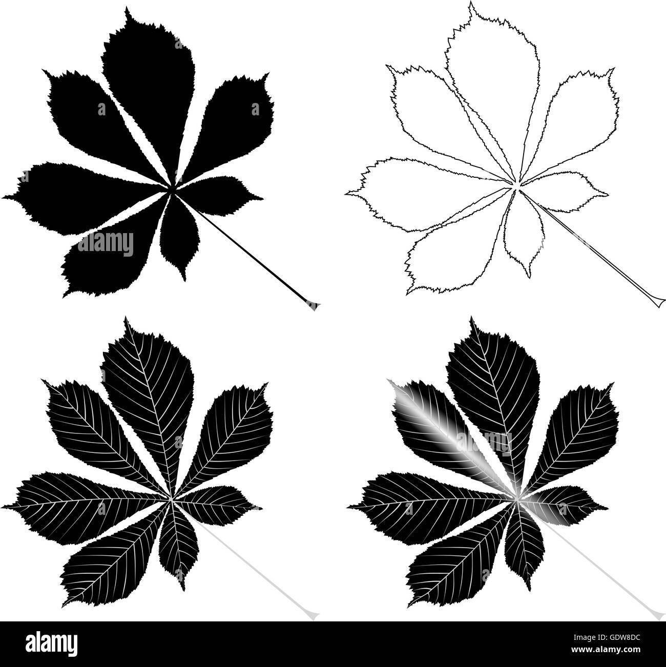 chestnut, buckeye ,(Aesculus hippocastanum) , vector, isolated buckeye leaf, - Stock Image