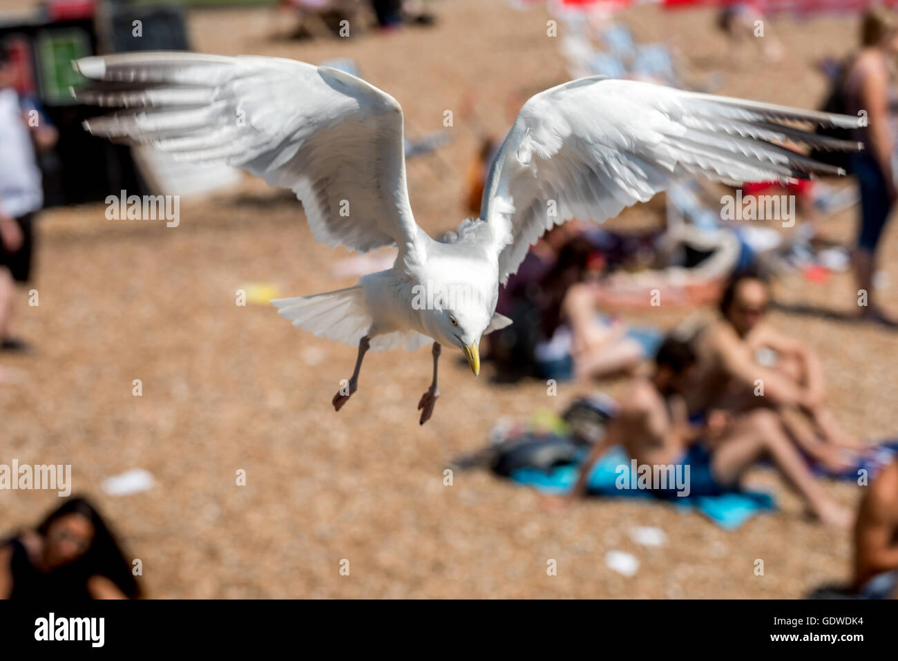 A seagull swooping over daytrippers on the beach at Brighton. - Stock Image
