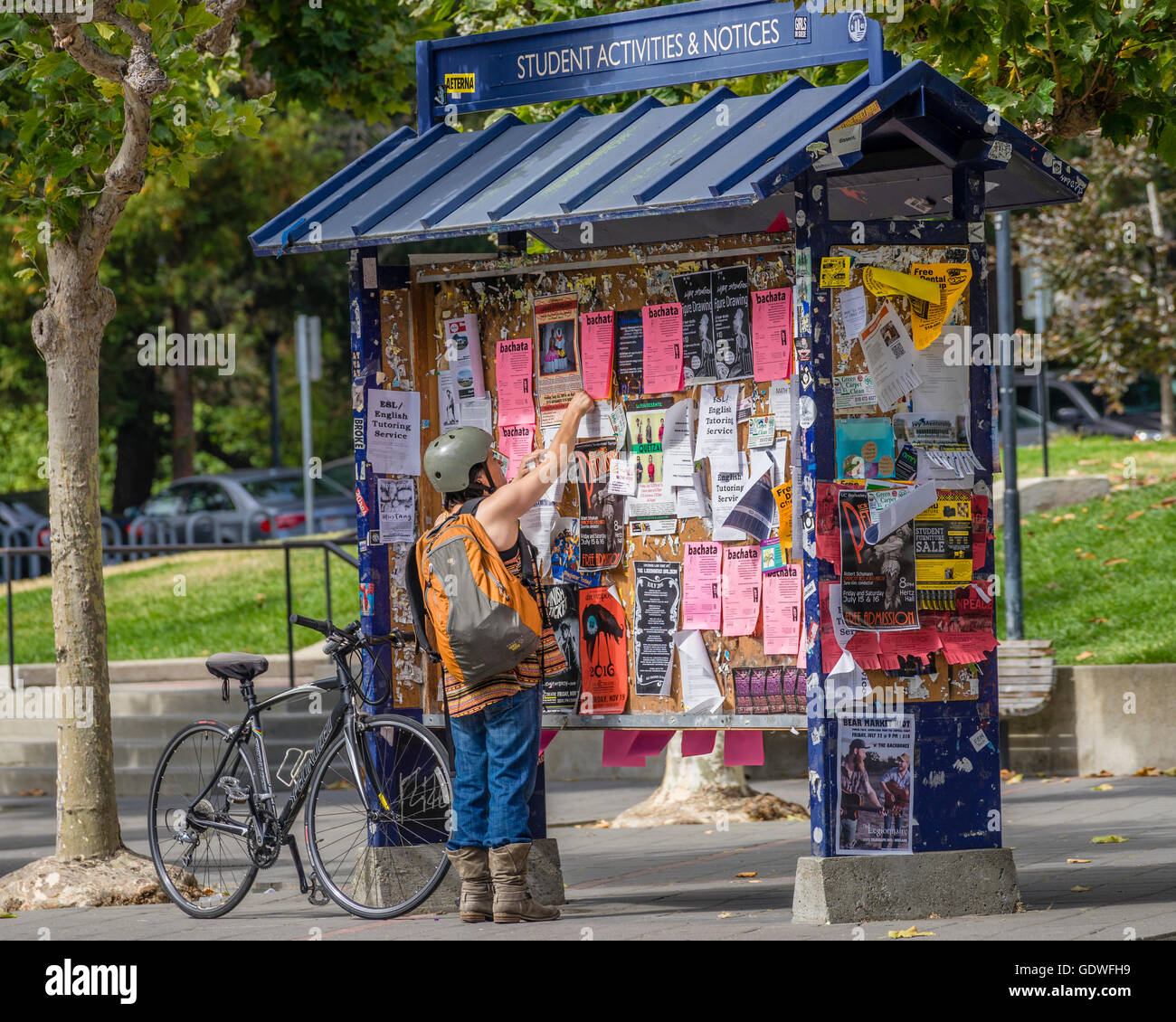 Woman on bicycle posting a flyer on a bulletin board kiosk on the University of California at Berkeley college campus - Stock Image