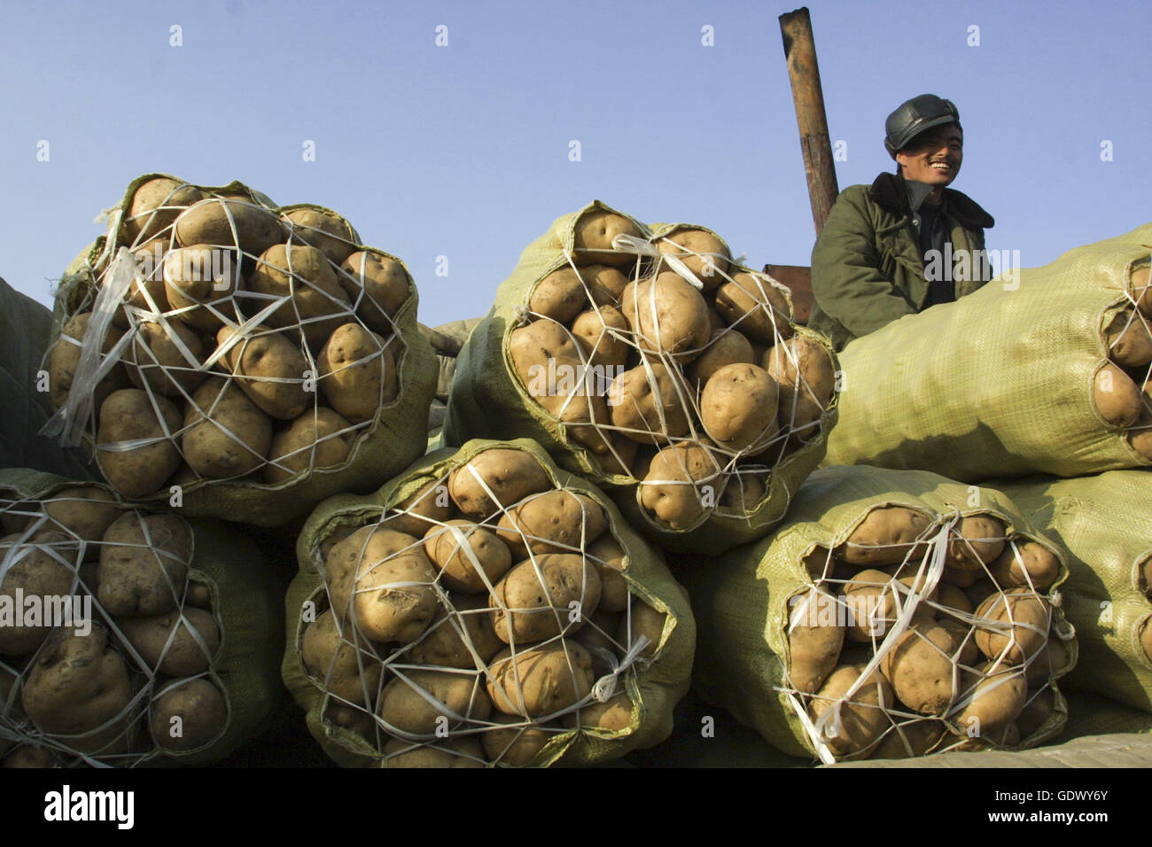 A worker sits besides some potatoes at a market - Stock Image